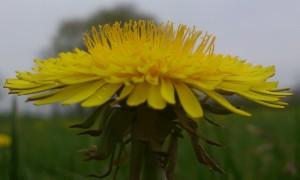 vive-le-printemps-hgoah