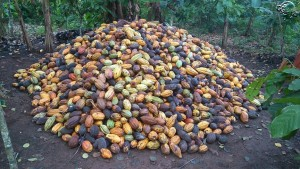 Tas de Cacao avant cabossage. Photo : Beau Nado