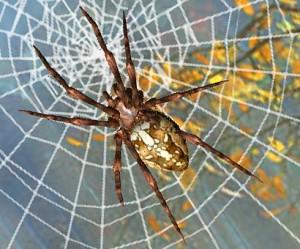 araignée et la toile