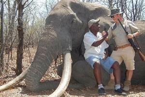 Le braconnier allemand pose devant l'éléphant abattu, le 8 octobre dernier. © DR