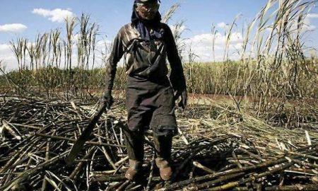 Un coupeur de canne à sucre dans une immense propriété située à 300 km de São Paulo. | Reuters